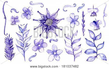 Watercolor hand drawn with brush and blue ink set with different malaysian plants and flowers isolated on white background. Large raster illustration with branches and buds. Floral collection.