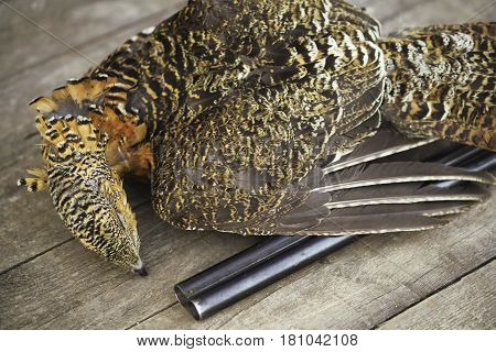 The Gun Killed The Bird Hunters, Prey, Capercaillie