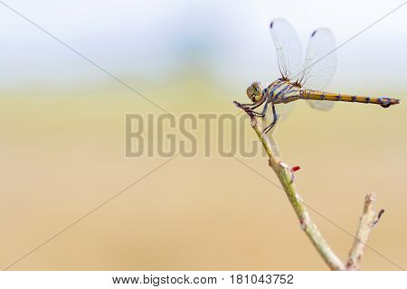 Dragonfly hanging on the dry branches on daylight