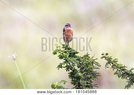 Small Bird Perched On Green Feaf Branch