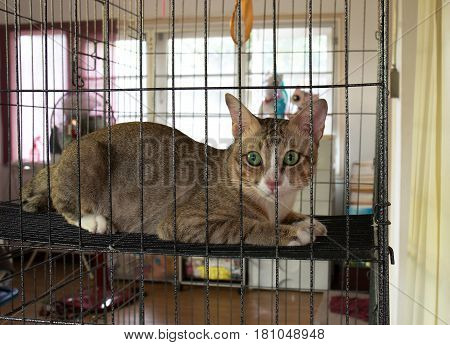 Lonely Cat Lay Down in The Cage
