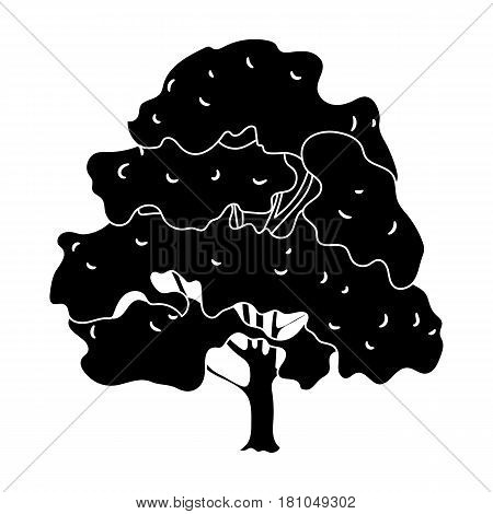 Canadian maple. Canada single icon in black style vector symbol stock illustration .