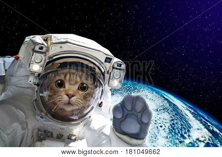 Cat astronaut in space on background of the globe. Elements of this image furnished by NASA.jpg