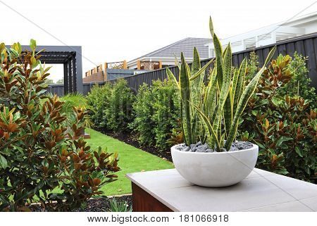 Backyard garden designs for small backyards in Australia with copy space