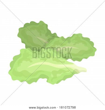 Salad leaves.Burgers and ingredients single icon in cartoon style vector symbol stock web illustration.