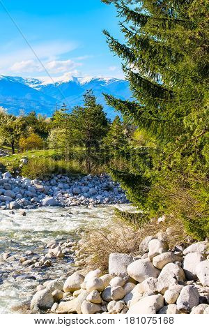 Spring landscape with pine trees, river and snowy peaks of Pirin mountains in Bansko, Bulgaria