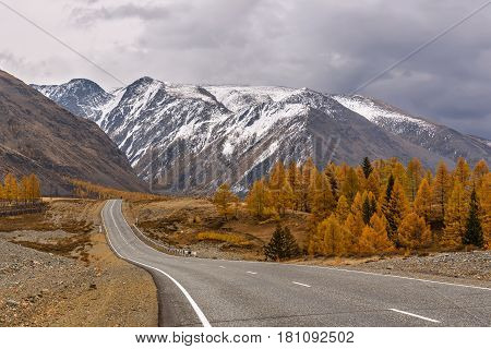A picturesque autumn view with an asphalt road mountains covered with snow and golden larches against a background of dark thunderclouds