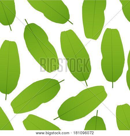 Vector illustration of Banana leaves seamless pattern.