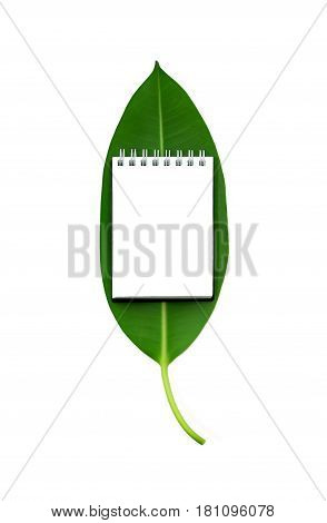 Fresh green ficus leaf with small open notebook on it with blank empty paper page isolated on white background. Top view flat lay. Ecology concept with mock-up.