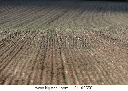 Abstract pattern in a freshly sown farmland.