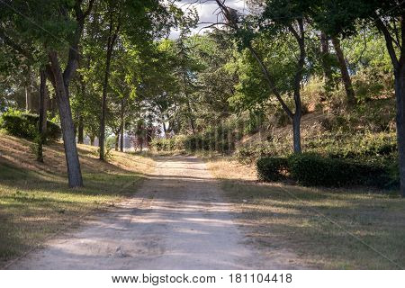 Dirt road through dense rainforest, wildlife, Spain