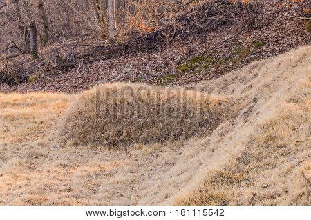 Unmarked burial mound covered with brown grass in mountain woodland area in South Korea