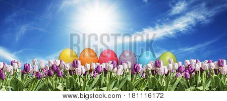 Eggs and pink and white Tulip on grassland blue sunny sky greeting Happy Eastern textspace