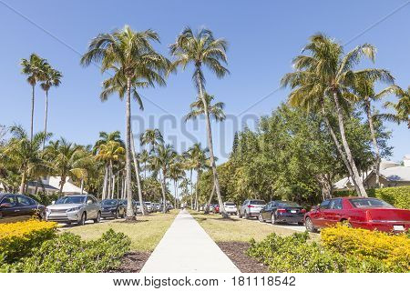 Coconut palm trees in the city of Naples. Florida United States