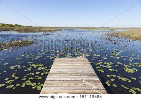 Swamp landscape in the Everglades National Park in Florida United States
