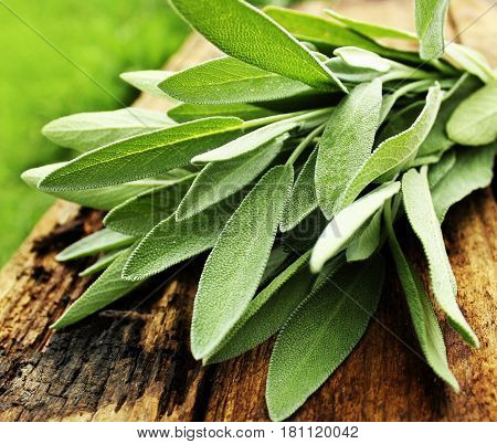 Fresh aromatic sage on old rustic wooden background