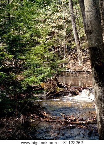 River In Bear Brook State Park New Hampshire