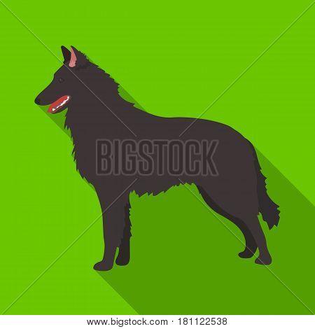 The dark Belgian wolf. Belgium single icon in flat style vector symbol stock web illustration.