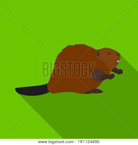 Canadian beaver. Canada single icon in flat style vector symbol stock illustration .