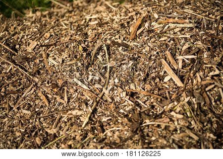 Woodchips lying outside in a garden under bright sunshine