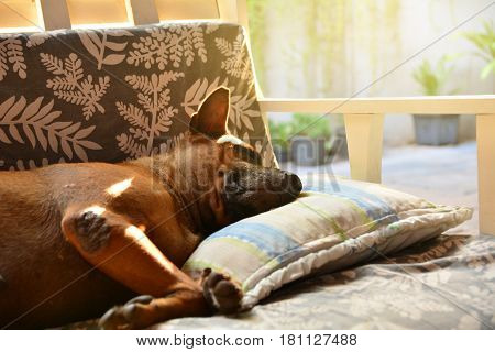 dog sleeping on sofa and take some rest.
