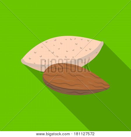 Almonds.Different kinds of nuts single icon in flat style vector symbol stock web illustration.