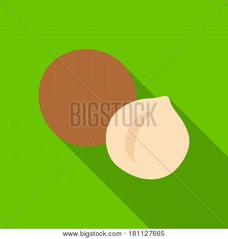 Macadamia.Different kinds of nuts single icon in flat style vector symbol stock web illustration.