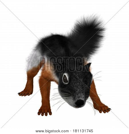 3D rendering of a Prevost's squirrel or Asian tri-colored squirrel isolated on white background