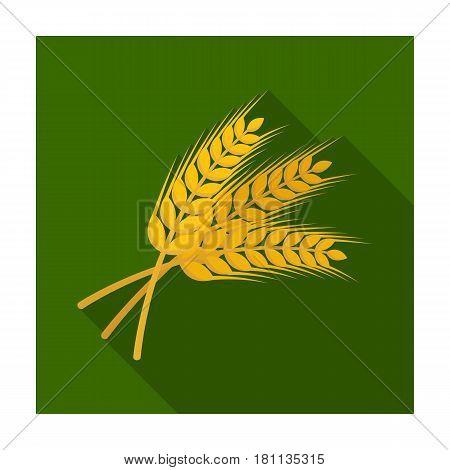 Sprigs of wheat. Plant for brewing beer. Pub single icon in flat style vector symbol stock web illustration.
