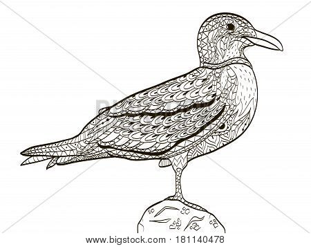 bird seagull coloring book for adults vector illustration. Anti-stress coloring for adult. Zentangle style nature. Black and white lines. Lace pattern.