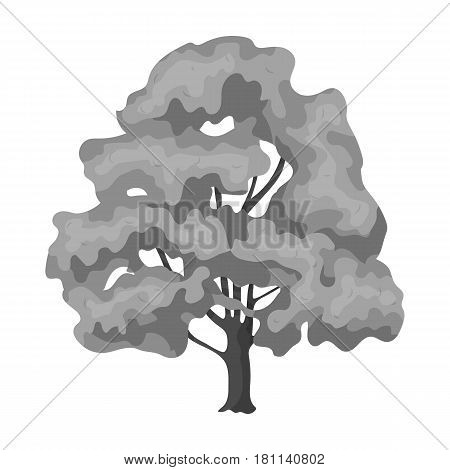 Canadian maple. Canada single icon in monochrome style vector symbol stock illustration .