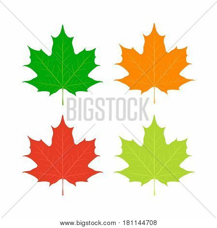 Maple leaves, Canada symbol. Red, orange, yellow maple in cartoon flat style.