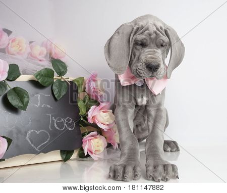 Purebred Great Dane puppy next to flowers and a sign that says I do too