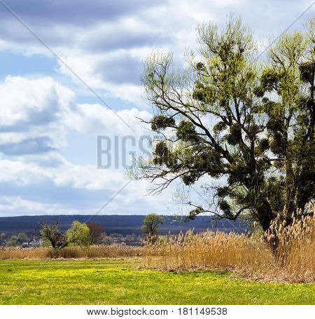 A tall tree on a background of clouds of luxurious nature around clean and green no one a good place for rest and meditation