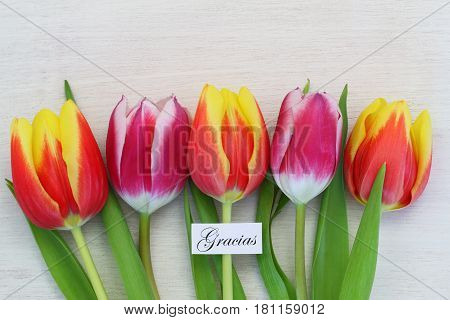 Gracias (which means thank you in Spanish) card with colorful tulips