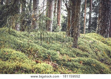 Fabulous thickets in mysterious forest with twigs covered with moss and grass in vintage colors