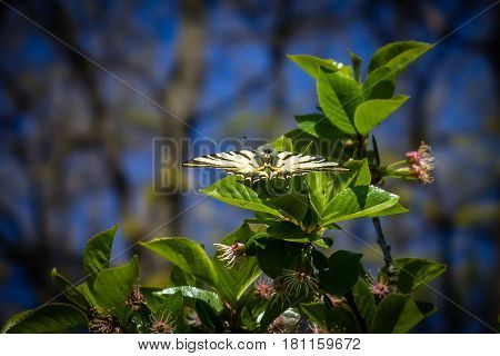 Beautiful butterfly  with open wings on a green leaf on a sunny day
