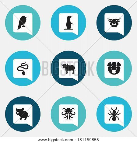 Set Of 9 Editable Zoo Icons. Includes Symbols Such As Tentacle, Philomel, Hog And More. Can Be Used For Web, Mobile, UI And Infographic Design.