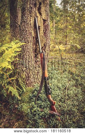 Hunting gun at tree trunk in forest during hunting season