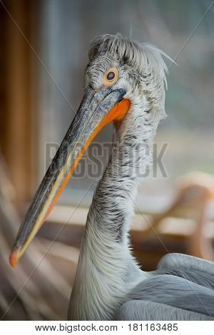 Portrait of a heron in a zoo in nature