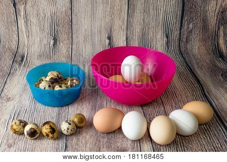 quail eggs and chicken eggs are in plastic bowls pink and blue on the inside outside in a semi-circle on a wooden table