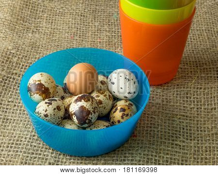 quail eggs and chicken for the feast of Easter for coloring are in plastic bowls with  blue  and orange and yellow on a burlap wooden table