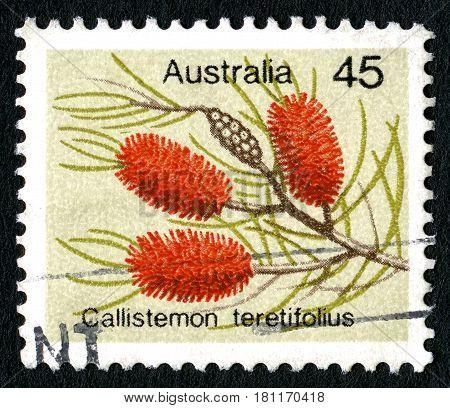 AUSTRALIA - CIRCA 1975: A used Australian postage stamp depicting an illustration of a Melaleuca orophila also known as a needle bottlebrush circa 1975.