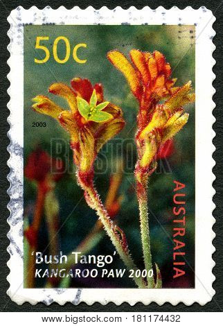ASUTRALIA - CIRCA 2003: A used postage stamp from Australia depicting an image of the Kangaroo Paw plant also known as Bush Tango circa 2003.