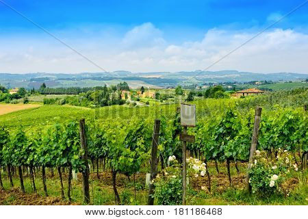 Rolling hills vineyards and beautiful countryside in Tuscany Italy.