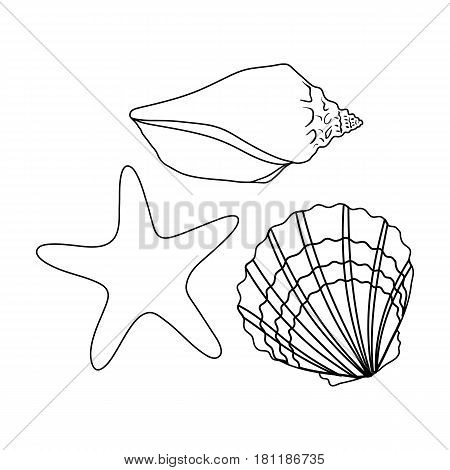 Seashells from the bottom of the sea.Summer rest single icon in outline style vector symbol stock web illustration.