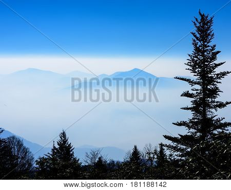 Silhouette Balsam Fur tree with the Smoky Mountains in a fog bank and sun peeking through.