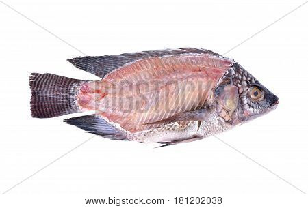 cross section of fresh Nile Tilapia fish on white background