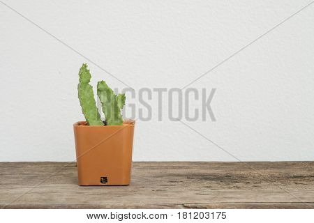 Closeup cactus in brown plastic pot on blurred wood desk and white cement wall textured background with copy space