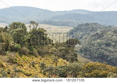 Scenic landscape of savanna in Horton Plains